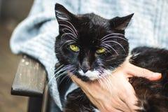ritratto di un gatto moro e sicuro che esamina macchina fotografica Immagini Stock