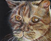 Ritratto di un gatto rosso Fotografie Stock