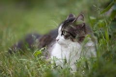 Ritratto di un gatto su fondo verde Fotografie Stock