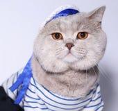 Ritratto di un gatto in un vestito del marinaio. Fotografie Stock Libere da Diritti