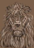 Ritratto di un leone, colore illustrazione vettoriale