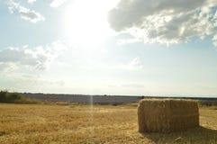 Ritratto di un prato di recente candeggiato di Straw Bale In A con una piantagione delle lavande sui precedenti a Brihuega Natura immagini stock