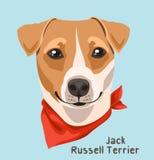 Ritratto di un terrier di Jack Russell della razza del cane con una fasciatura intorno al suo collo Fotografia Stock