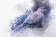 Ritratto di un uccello del piccione, pittura dell'acquerello Illustrazione dell'uccello fotografie stock