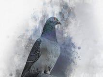 Ritratto di un uccello del piccione, pittura dell'acquerello Illustrazione dell'uccello illustrazione vettoriale