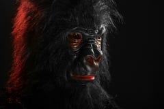 Ritratto di un uomo con il costume di Halloween della gorilla Fotografie Stock Libere da Diritti