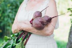 Ritratto di una donna anziana in un cappello tenendo le barbabietole Fotografie Stock Libere da Diritti