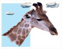 Ritratto di una giraffa isolata su fondo bianco Immagine Stock Libera da Diritti