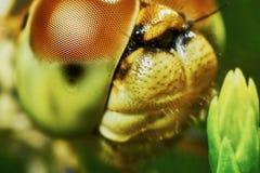 Ritratto di una libellula fotografie stock libere da diritti