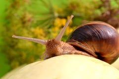 Ritratto di una lumaca su un fondo delle piante Immagini Stock