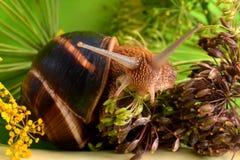 Ritratto di una lumaca su un fondo delle piante Immagine Stock Libera da Diritti