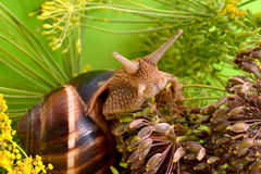 Ritratto di una lumaca su un fondo delle piante Immagini Stock Libere da Diritti