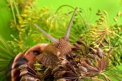 Ritratto di una lumaca su un fondo delle piante Fotografia Stock Libera da Diritti
