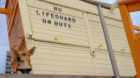 Ritratto di una miscela del terrier Fotografia Stock Libera da Diritti