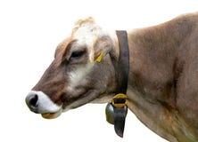 Ritratto di una mucca Fotografie Stock