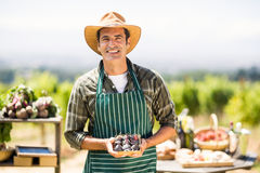 Ritratto di una scatola sorridente della tenuta dell'agricoltore di fico Fotografia Stock