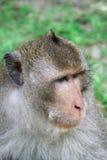 Ritratto di una scimmia Fotografie Stock Libere da Diritti