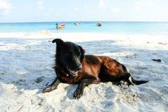 Ritratto di vecchio cane nero sulla spiaggia fotografia stock libera da diritti