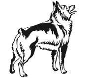 Ritratto diritto decorativo dell'illustrazione di vettore dello schipperke Immagini Stock