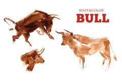 Ritratto disegnato a mano dell'acquerello della mucca isolato su fondo bianco Immagine Stock Libera da Diritti