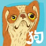 Ritratto divertente del pechinese o di Pechino Lion Dog Fotografie Stock Libere da Diritti