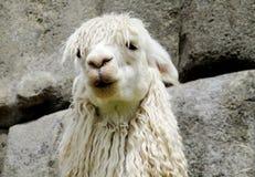 Ritratto divertente della lama Immagine Stock