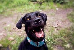 Ritratto felice del cane Fotografia Stock