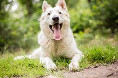 Ritratto felice del cane Immagine Stock Libera da Diritti