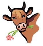 Ritratto felice della mucca multicolore Fotografia Stock