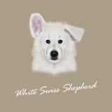 Ritratto illustrato vettore del cane da pastore svizzero bianco Fotografia Stock