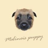 Ritratto illustrato vettore del cane di Malinois Fotografia Stock