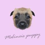 Ritratto illustrato vettore del cane di Malinois Fotografia Stock Libera da Diritti