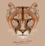 Ritratto indicativo di vettore del leone di montagna Fotografia Stock