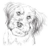Ritratto lanuginoso del disegno della mano di vettore del cane royalty illustrazione gratis