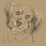 Ritratto lanuginoso monocromatico del disegno della mano di vettore del cane illustrazione vettoriale