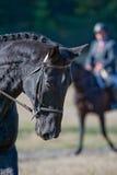 ritratto nero del cavallo Immagini Stock