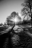 Ritratto nudo degli alberi di inverno Immagini Stock Libere da Diritti