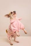 Ritratto shot-8 del cane Immagine Stock Libera da Diritti