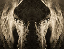 Ritratto simmetrico artistico dell'elefante nella seppia Tone With Dramatic Backlighting Fotografia Stock