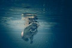 Ritratto subacqueo di giovane donna Fotografie Stock Libere da Diritti