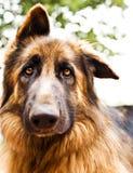 Ritratto sveglio del cane fotografia stock libera da diritti