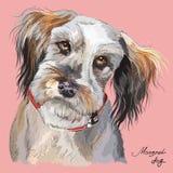Ritratto variopinto del disegno della mano di vettore del cane lanuginoso illustrazione vettoriale