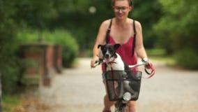 Ritratto vicino di un cane in un canestro della bicicletta La ragazza porta il suo cane in un canestro della bicicletta, animali  video d archivio