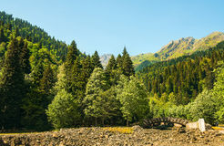 Rits's lake Abkhazia panoramic view. Beautiful view of the lake of Rits. excellent moods, paradise place, excellent travel Royalty Free Stock Image