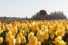 Ritt för ballong för varm luft över tulporna Royaltyfria Foton