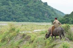 Ritt på vattenbuffel Royaltyfria Bilder