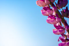 Rittersporn in der Wiese am sonnigen Tag stockfoto