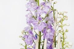 Ritterspornblume lokalisiert auf weißem Hintergrund Lizenzfreies Stockbild