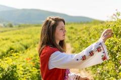 Ritual de la cosecha de Rose en pueblo búlgaro imágenes de archivo libres de regalías
