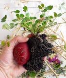 Rituale pagano ortodosso dello slavo anziano di fertilità Preparando a sbavare l'uovo di Pasqua nel prato, prima fila nel campo p fotografia stock